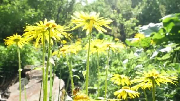 Západ slunce květ příroda rostliny