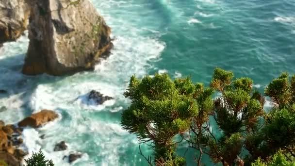 Wave ocean plant water