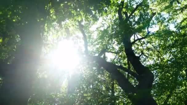 Lesní stromy přírody slunce