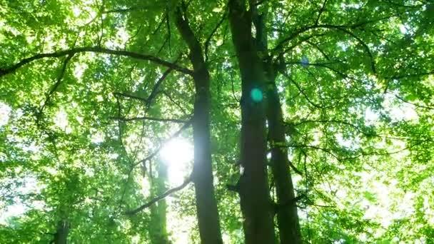 Forest slunce větve zelené