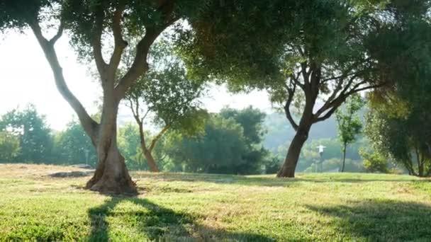 Grass park přírody strom
