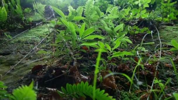 Horský lesní tráva přesunout