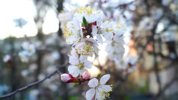 Tavasszal virágzó