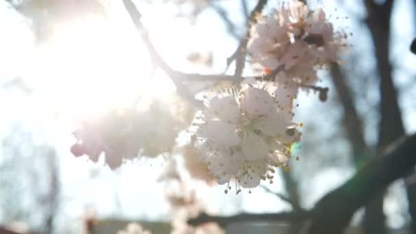 jarní květ květiny