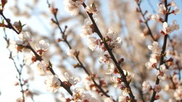Blooming flowers spring park