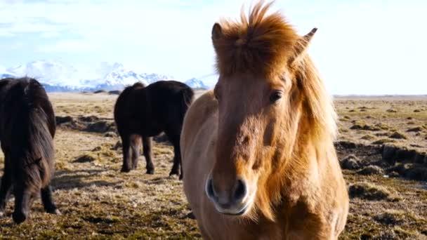 Koňská vesnice na severu