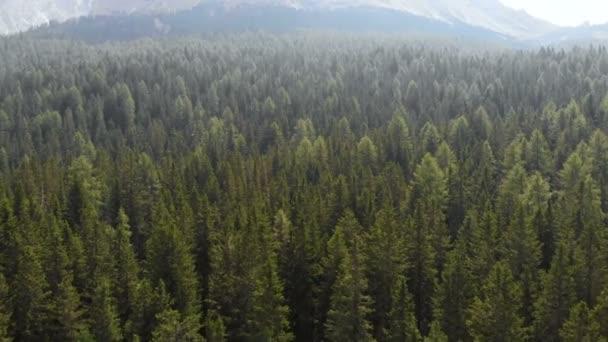 Létající horský Les