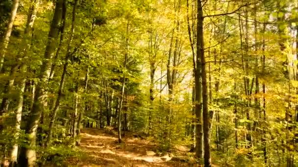 Podzimní listí les hýbe přírodou