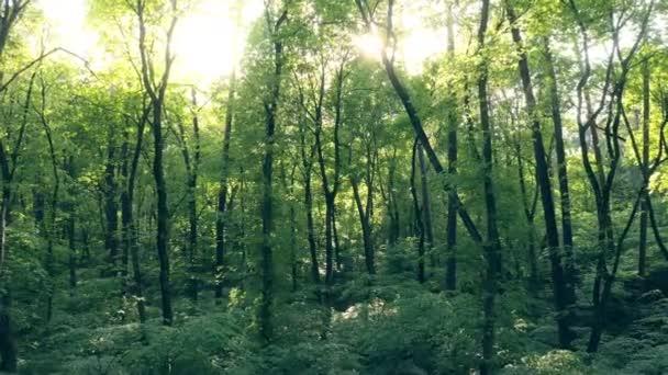 Jungle les slunce stromy léto zelená příroda příběh