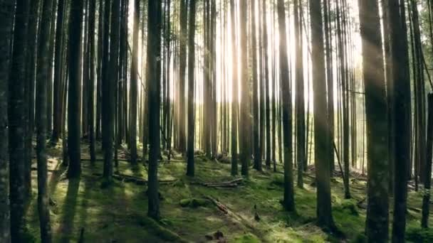 Sunny forest rays trees magic sunrise nature green ecology
