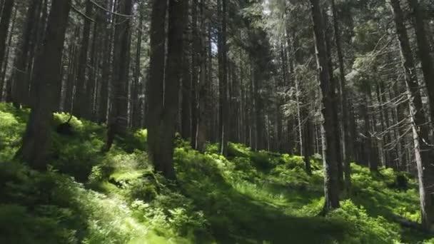 Wald Berge Hügel Natur grünes Licht Geschichte Magie Sonne wild