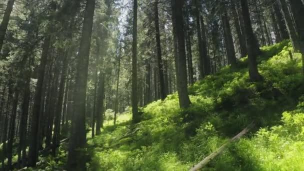 Les magické léto ráno zelená příběh rostliny