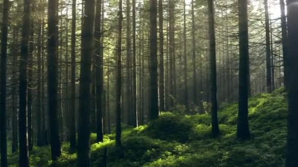 Lesní paprsky zelené ráno příroda list listy slunce