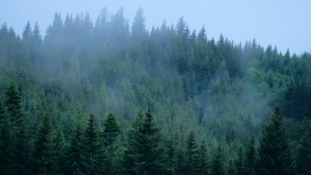 Déšť počasí hory mlhavé mlha borovice les