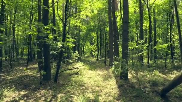 Lesní slunce letní příběh paprsky dřevo