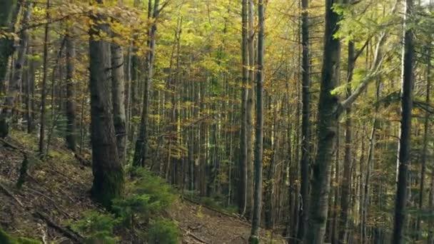 Les krásné ranní sluneční paprsky magický podzimní příběh