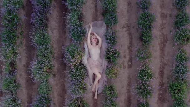 Letecký filmový dron pohled na ženu ležící v barevných levandulových polích na slunečný den kvetoucí fialové květy. Pohled nahoru