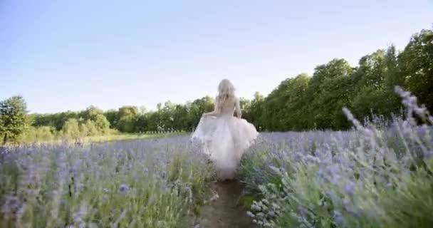 Filmový pohled na ženu běh Barevná levandulová pole na slunečný den kvetoucí fialové květy.
