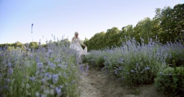 Filmový pohled na tančící ženu Barevná levandulová pole na slunečný den kvetoucí fialové květy.