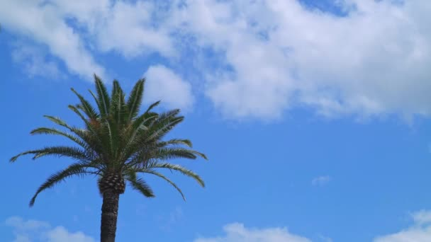 Time lapse of palm tree and blue sky with clouds on a nice day