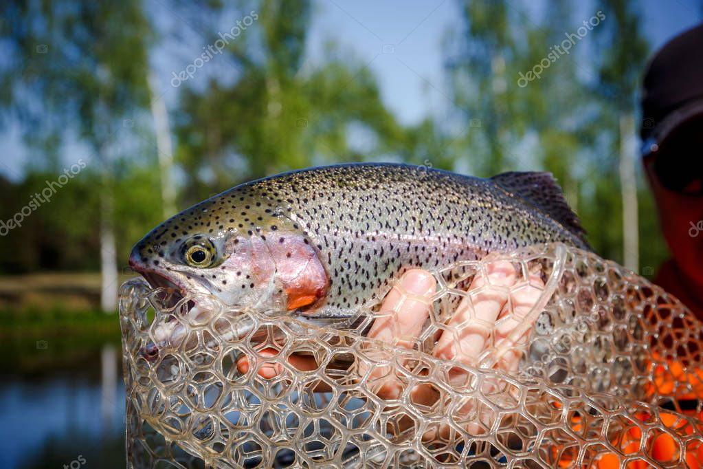 Fishing competitions. Trout is caught on a hook
