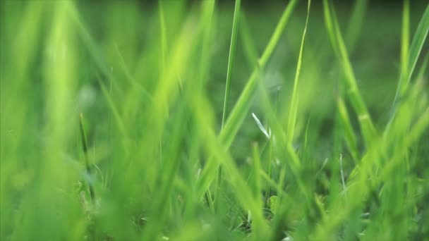 Élénk zöld fű közelről