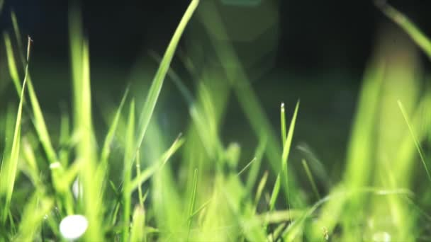 Vibrant green grass close-up