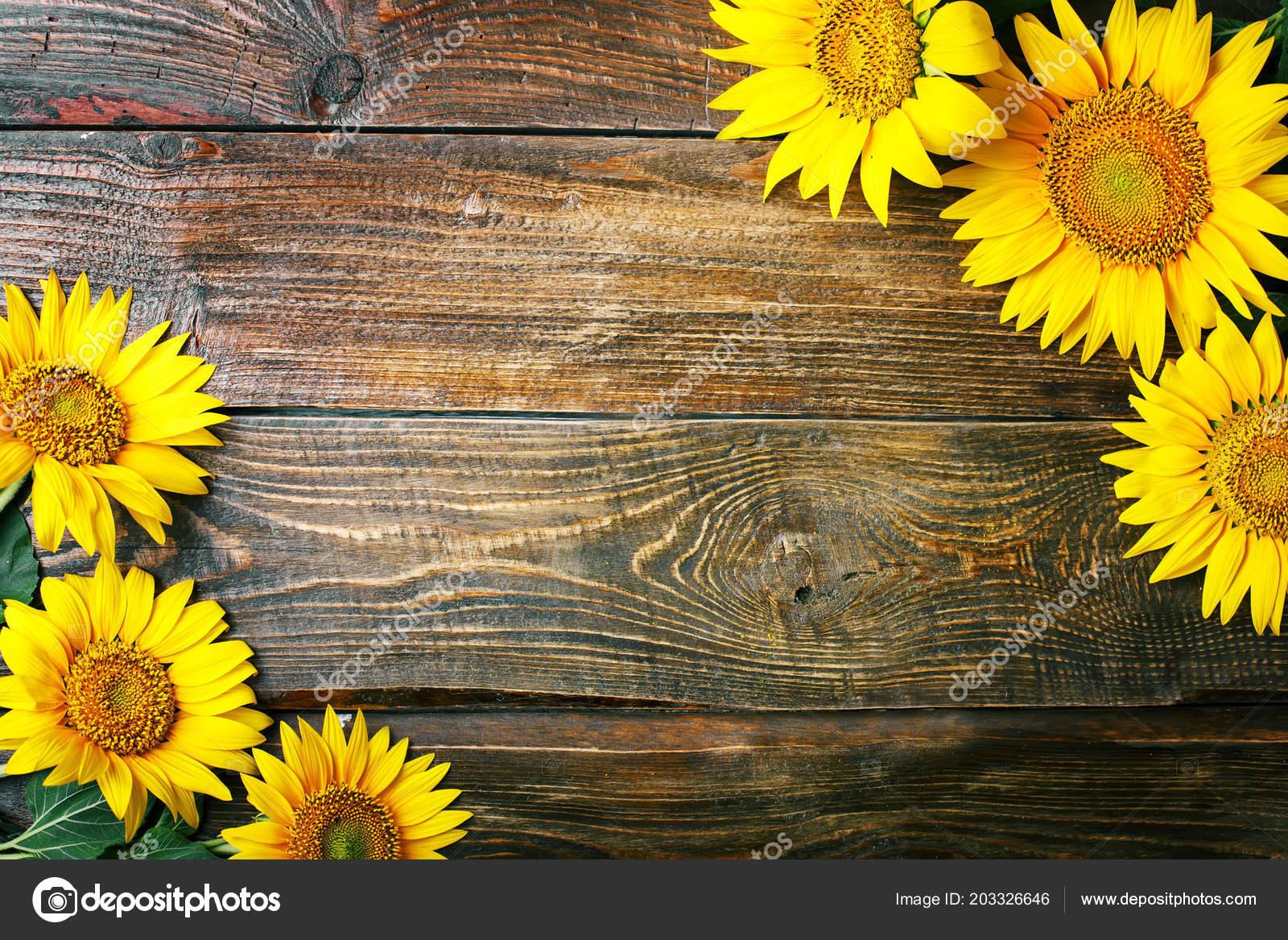 Hermosos Girasoles En Una Mesa De Madera. Vista Desde