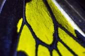 Schmetterlingsflügel unter der Lupe