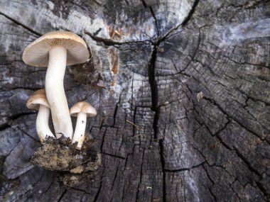 mushrooms of the forest zone