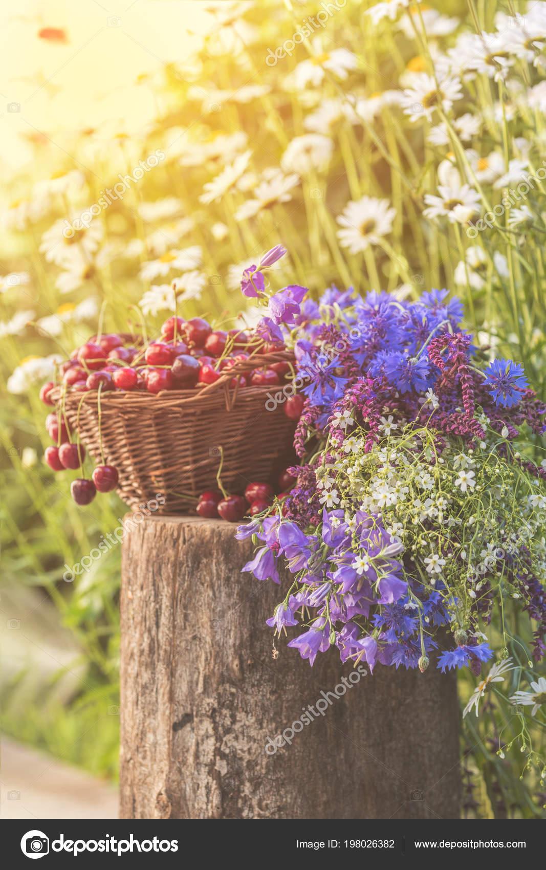 Fresh Red Cherries Wicker Basket Thyme Cornflower Blue Bells White