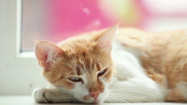 Zámecká zahrada šťastný kotě spí na bílém parapetu, zblízka, dynamické scény, 50fps videa.