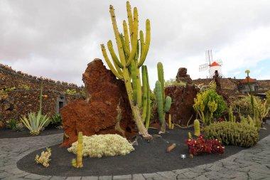 View of cactus garden with windmill, Jardin de Cactus in Guatiza, Lanzarote, Canary Islands, Spain