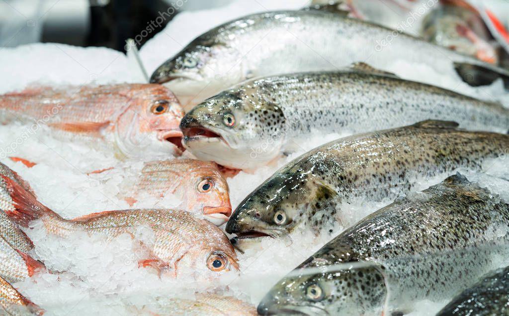 Fresh salmon in ice in seafood market