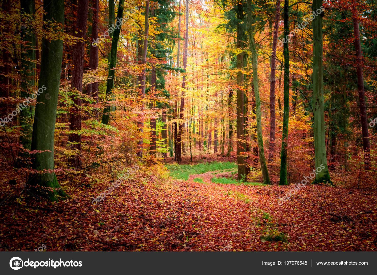 Stunning dark forest fall poland stock photo shaiith79 197976548 stunning dark forest fall poland stock photo publicscrutiny Gallery