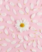 Fotografie flowers background, White daisies flowers.