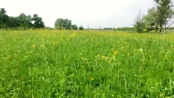 Pohyb na zemi a zelená tráva a květiny