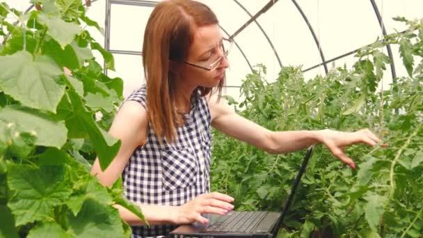 Junge Frau Gartner Arbeiten Mit Pflanzen Im Gewachshaus Eine