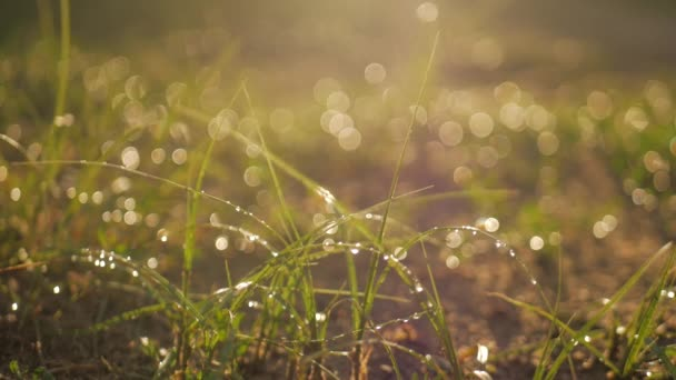 kapky rosy na zelené trávě.