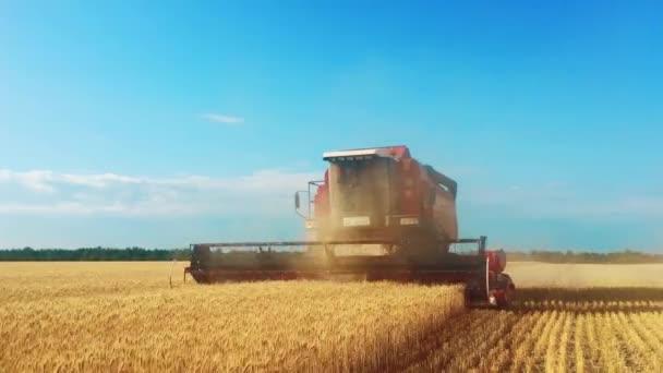 Kombajn sklízí obilí. Nůžky na sklizeň pšenice. Kombinace v oboru Koncept potravinářského průmyslu.