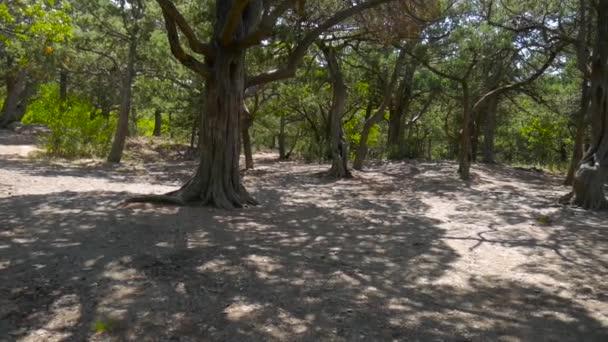 Kořeny stromu v lese.