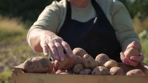 Farmář držící brambory. Zdravé jídlo s vitamíny. Čerstvé a organické jídlo. Koncept vegetariánů, organických a přírodních produktů.