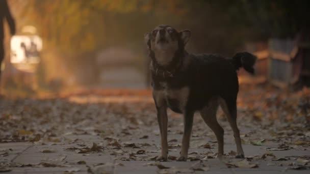 fekete-fehér tiltsa le a kutya ugat, mint utcai kutya.