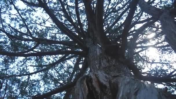Mlhavé svítání vidět skrze větve stromů. Holých větví zimní sezóny, sezóna specifický obraz přírody