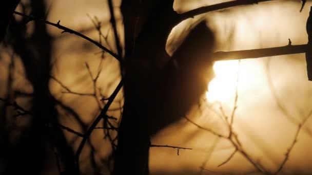 Mlhavé svítání vidět skrze větve stromů. Holých větví zimní sezóny, sezóna specifický obraz přírody.