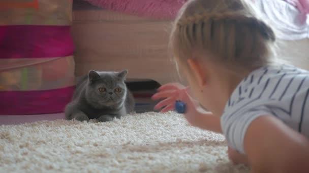 A csinos lány játszik egy szürke macska otthon. Egzotikus Gyorsírás macska