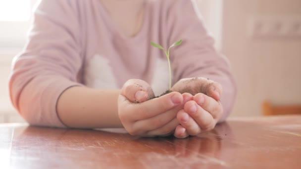 Dívka v rukou držel mladých zelených rostlin. Koncept a symbolem růstu, péče, ochrana země, ekologie.