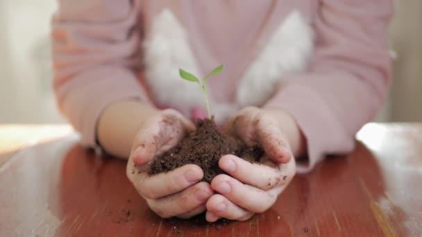 A lány fiatal zöld növény tartja kezében. Koncepció és a jelképe a növekedés, ellátás, védi a földet, ökológia.