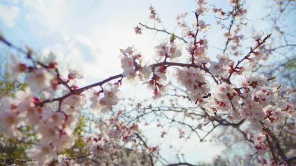 Krásná příroda s kvetouním stromem a sluneční erupcí. Jarní květy v sadu. Inspirativní jarní květiny a kvetoucí strom.