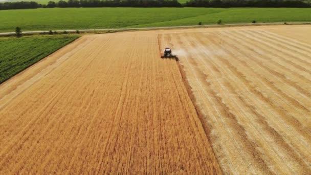 Letecký pohled kombinuje sklízecí úrodu. Nůžky na sklizeň pšenice. Kombinuje se v oboru potravinářského průmyslu. 4k